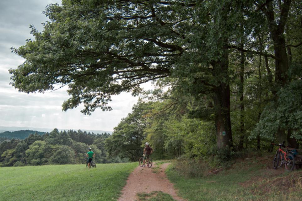 Mountainbike-Rundstrecke Gorxheimertal