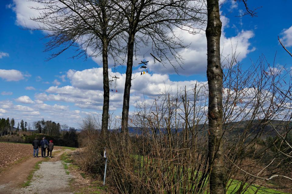 Mountainbikestrecke Hammelbach