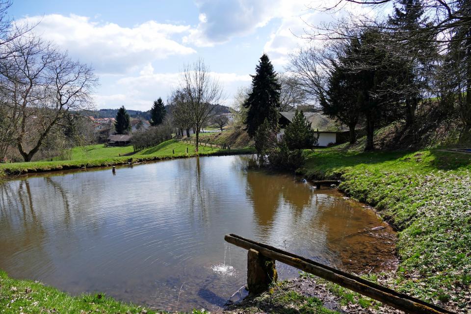 Teich bei Hammelbach