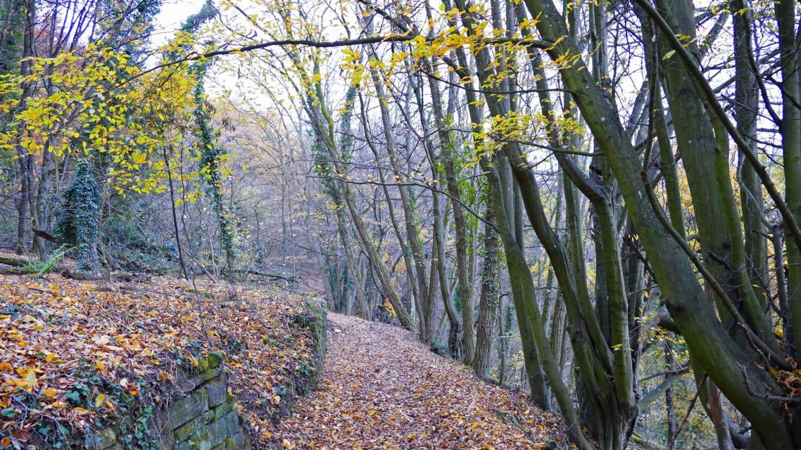 Waldromantikweg