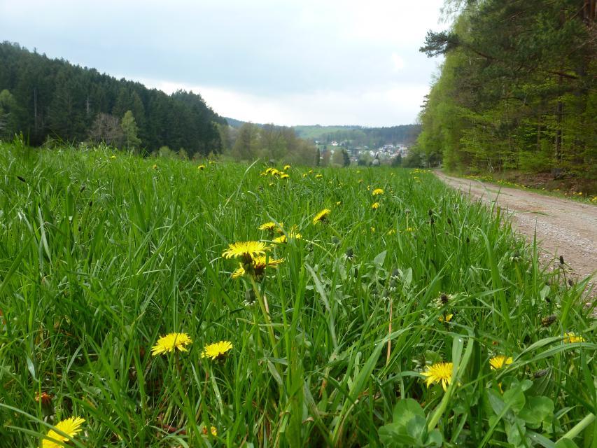 Weg nach Grasellenbach