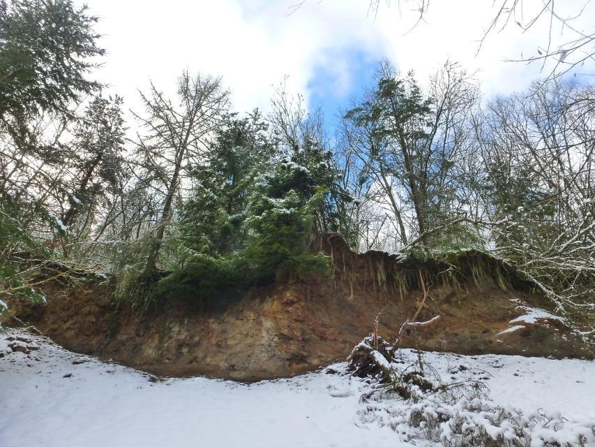 Steinbruchwand aus dem Jura