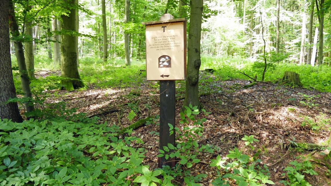 Gebet im Wald
