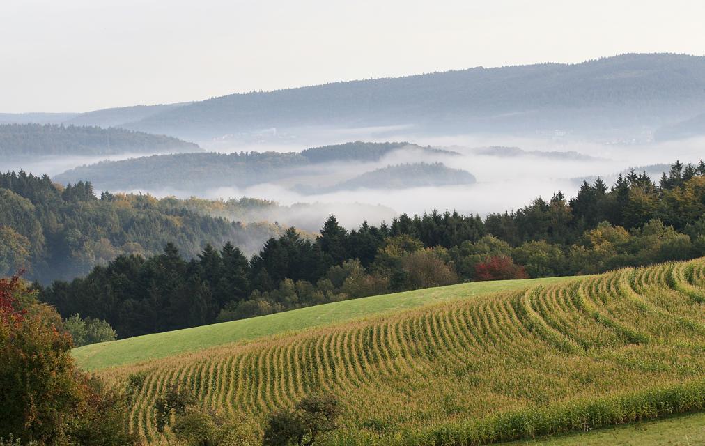 Siedelsbrunn im Nebel