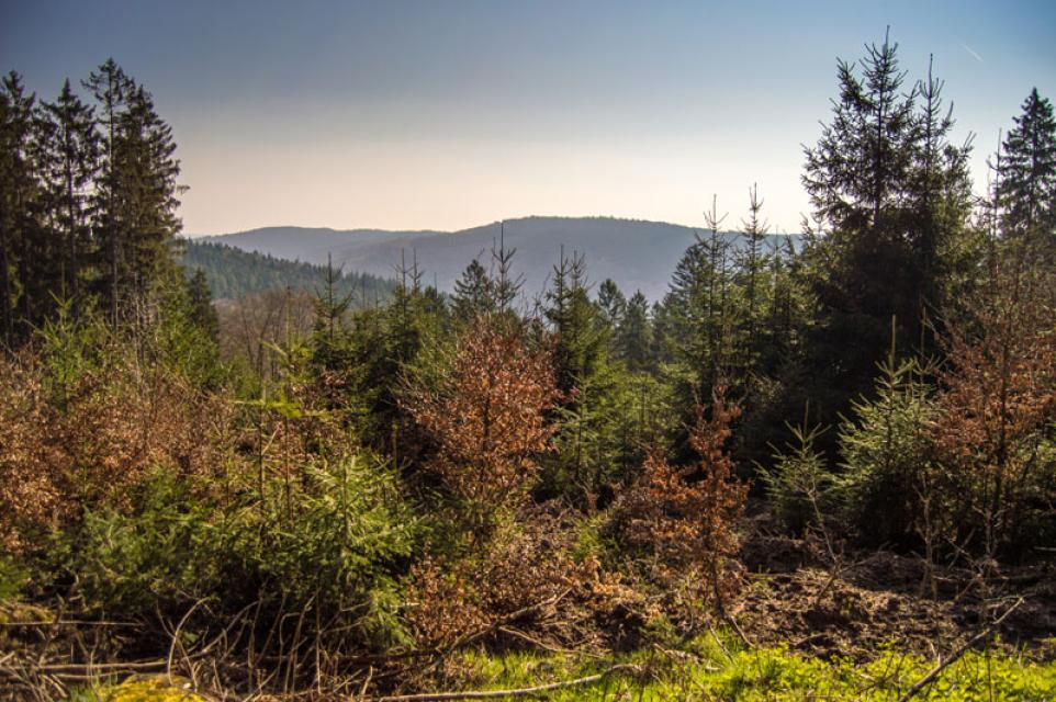 Mountainbike-Rundstrecke Siedelsbrunn