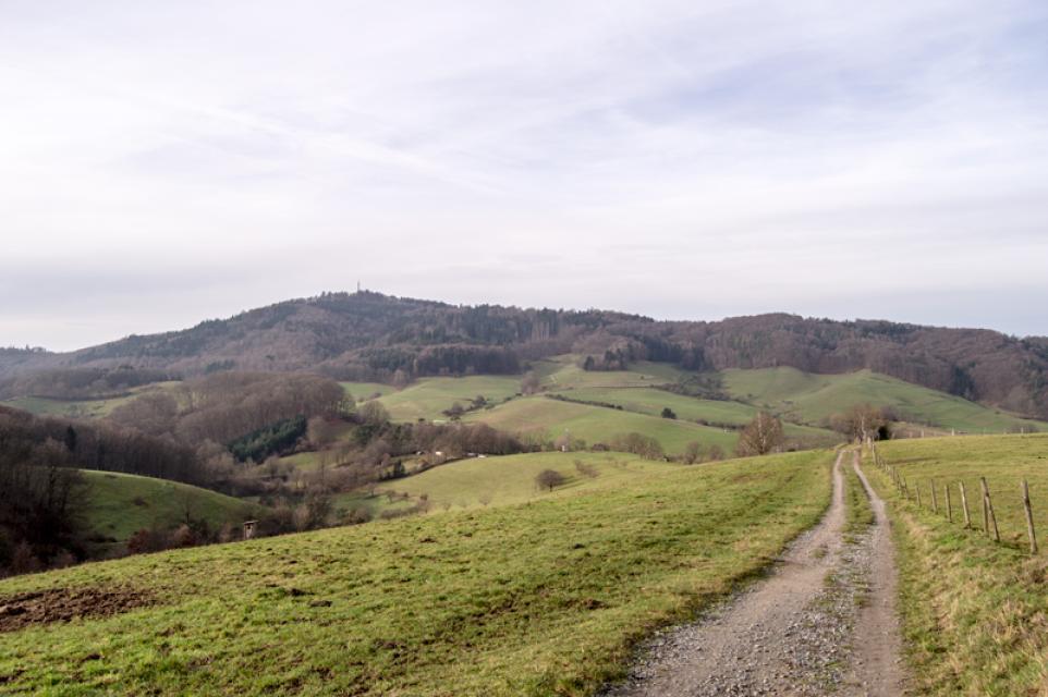 Mountainbike-Strecke Nördliche Bergstraße