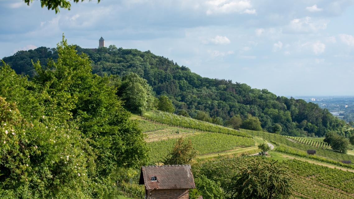 Blick von den Weinbergen auf die Starkenburg Heppenheim