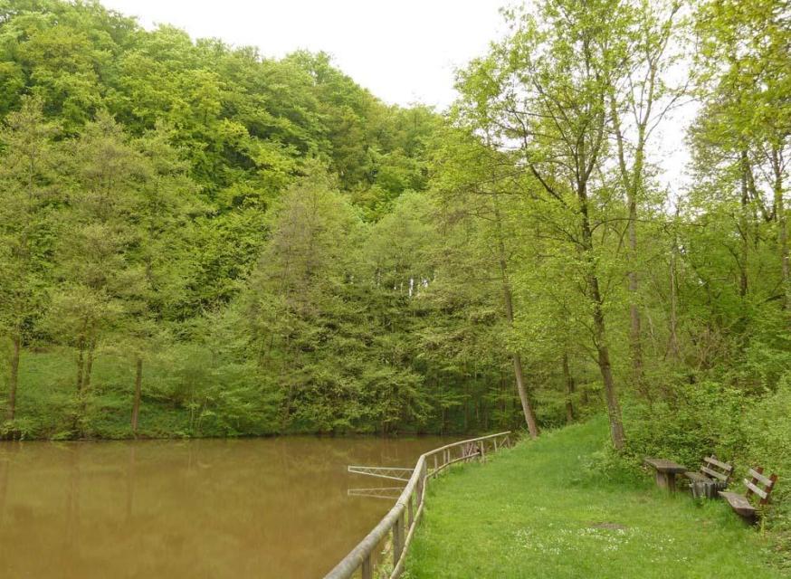 Teich Dornwiese