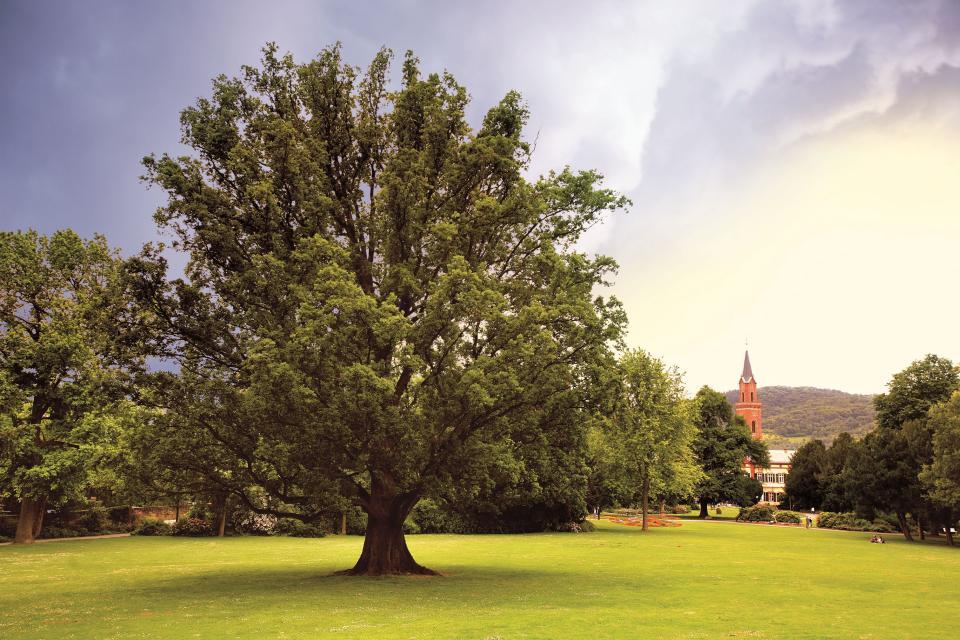 Wiese bei Weinheim