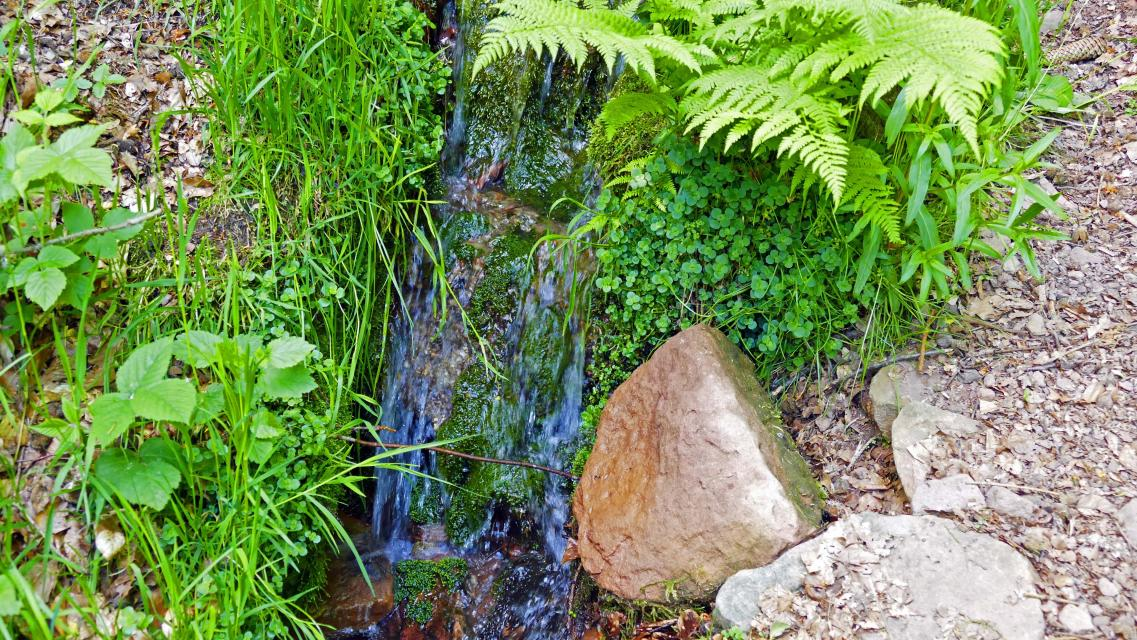 Quelle bei Hainbrunn