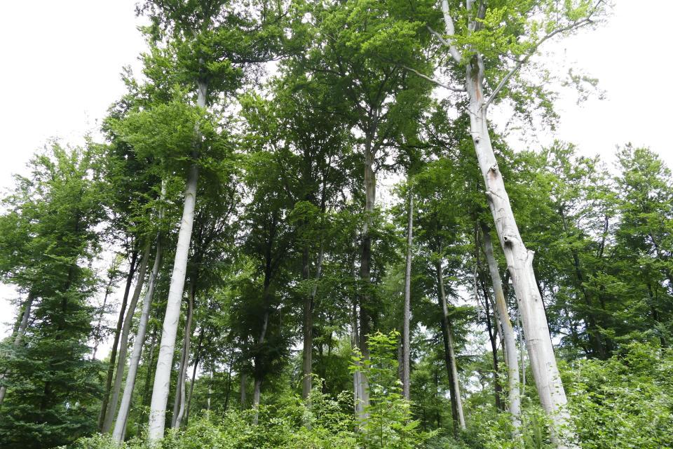 Wälder Messeler Hügelland