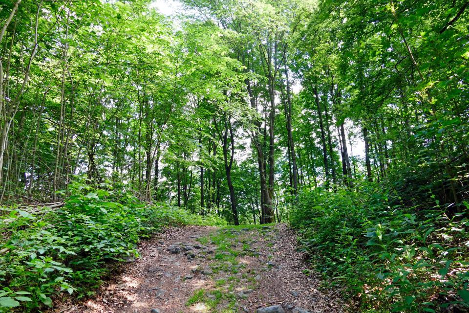 Wald mit Pfad