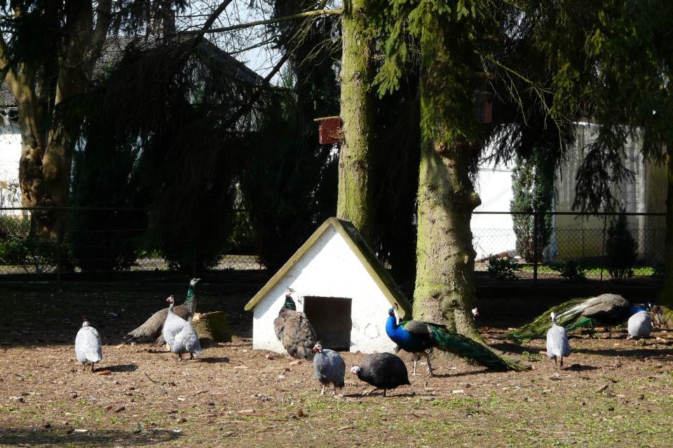 Groß-Rohrheimer Vogelpark