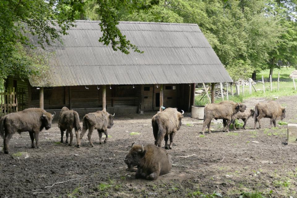 Wisentgehege im Eulbacher Park