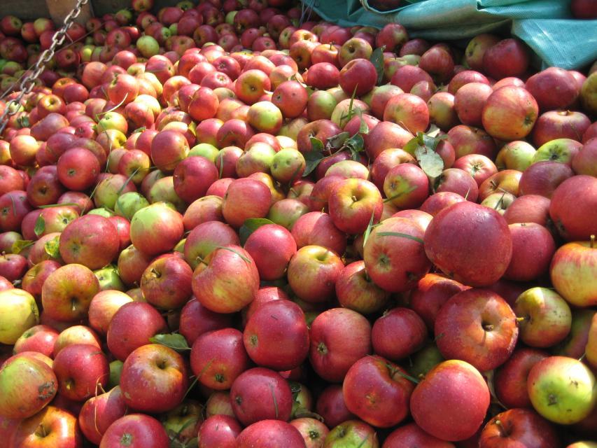 Äpfel vom Hof Modautal