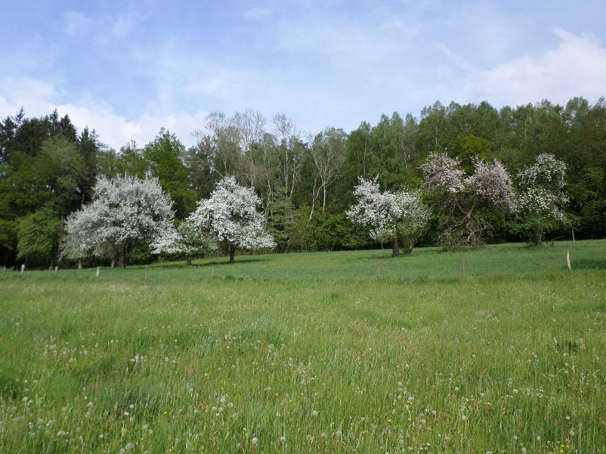 Wälder und Wiesen im Mossautal