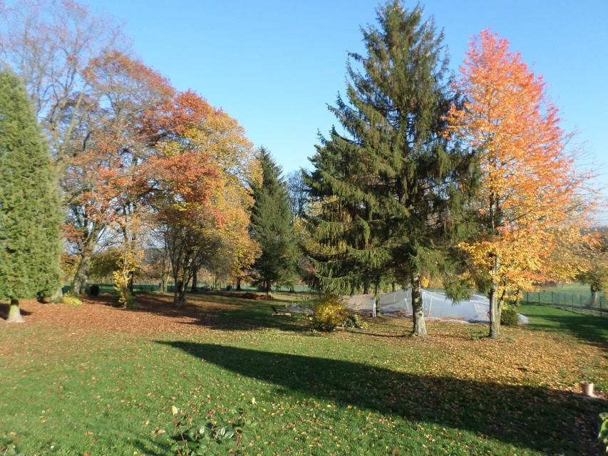 Grünanlage im Herbst