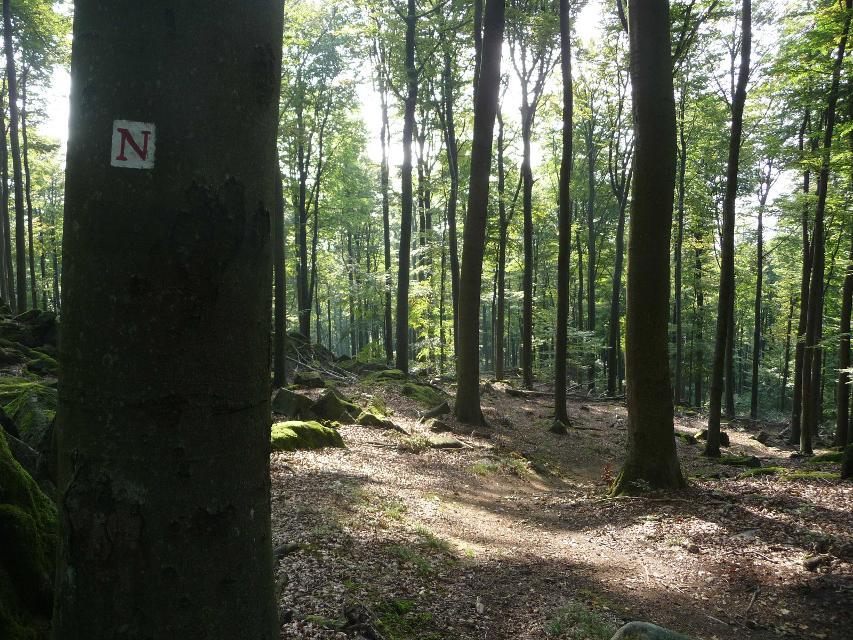 Wandern auf dem Nibelungensteig