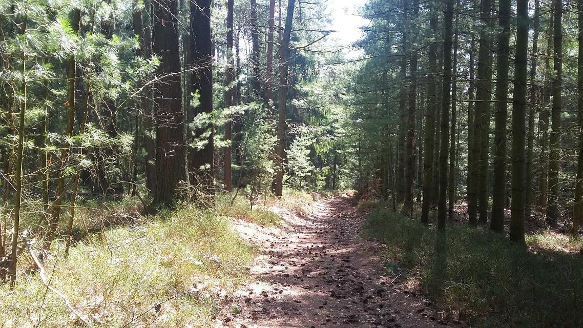 Der Wald ist nur wenige Schritte entfernt