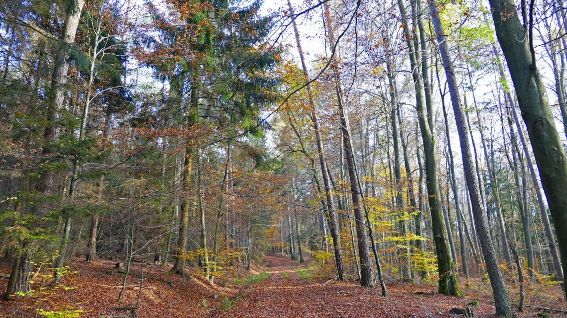 Waldweg nach Kimbach