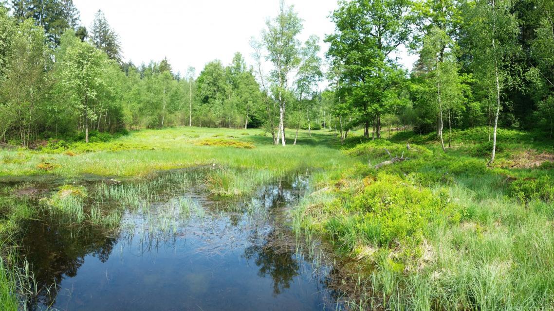 """Im Naturschutzgebiet """"Rotes Wasser"""" bei Olfen liegt eines der letzten echten Hochmoore im Odenwald."""