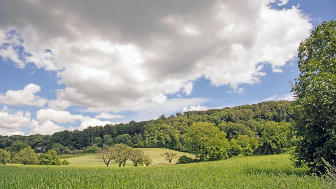 Feld bei Alsbach
