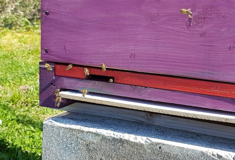 Bienenlehrpfad Alsbach