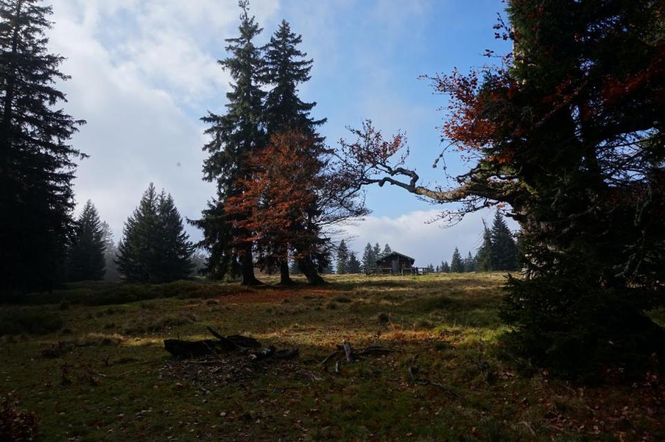 """Herbst auf der Hochzell mit """"Woid Woife"""""""