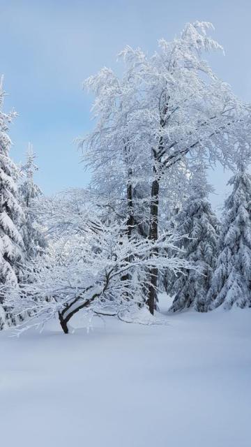 Schneeschuh - Genusswanderung durch den Bayerwald!