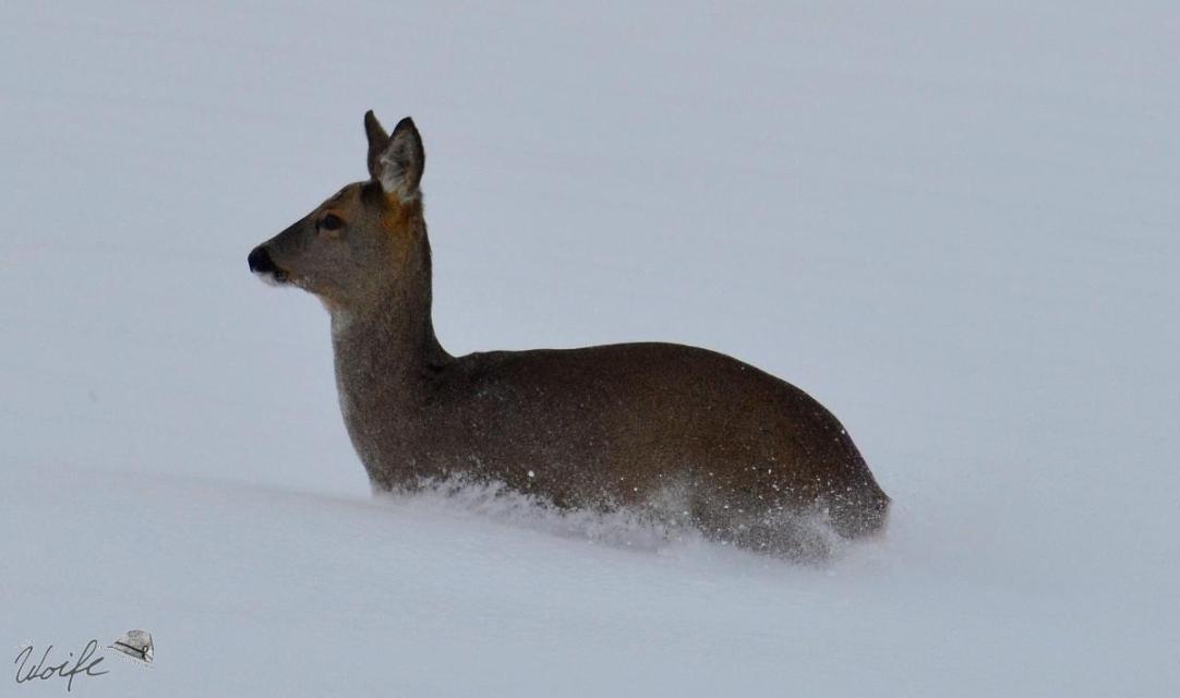 """""""Woid Woife"""" Die Tierwelt im Winter"""