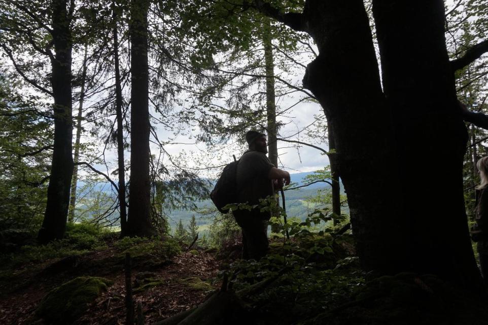 """Der Wald erwacht mit """"Woid Woife"""""""