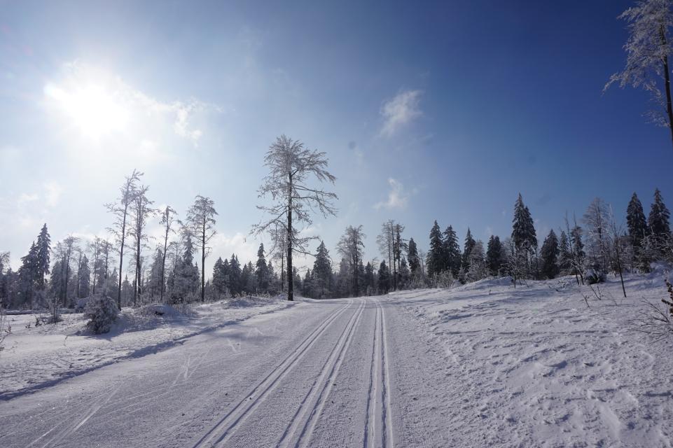 Grün 6 km klassisch / Skating