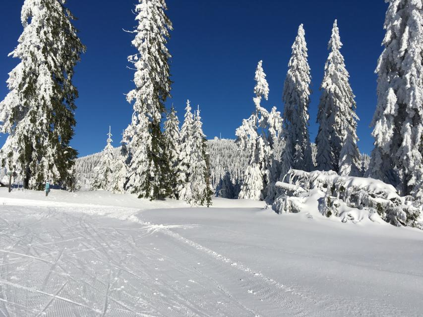 Rot 15 km klassisch / Skating