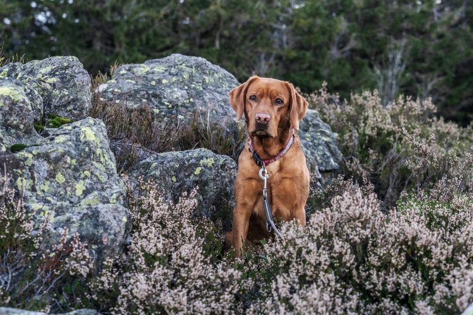 Bodenmaiser Glückshund: tierisch toller Urlaub mit deinem Vierbeiner