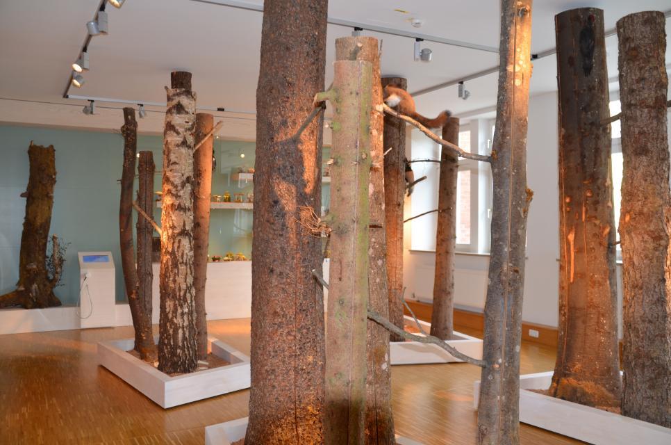 Waldmuseum