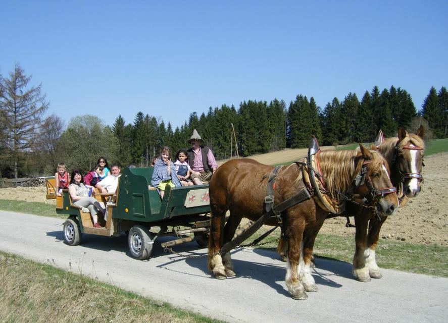 Pferdekutschenfahrt Sammerhof
