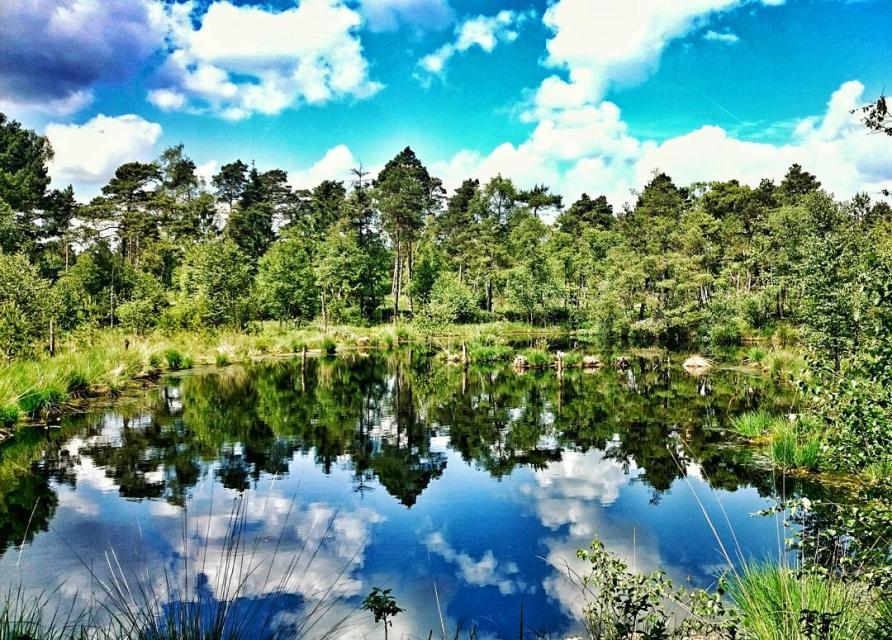 Naturschutzgebiet  Grundloser See und Moor
