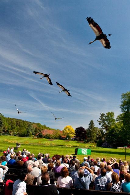 Große Vogelpark-Region Runde