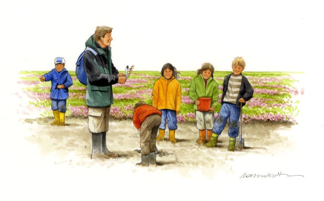 """""""Watt"""" – zum Buddeln – Eine Kinder Watt-Safari"""