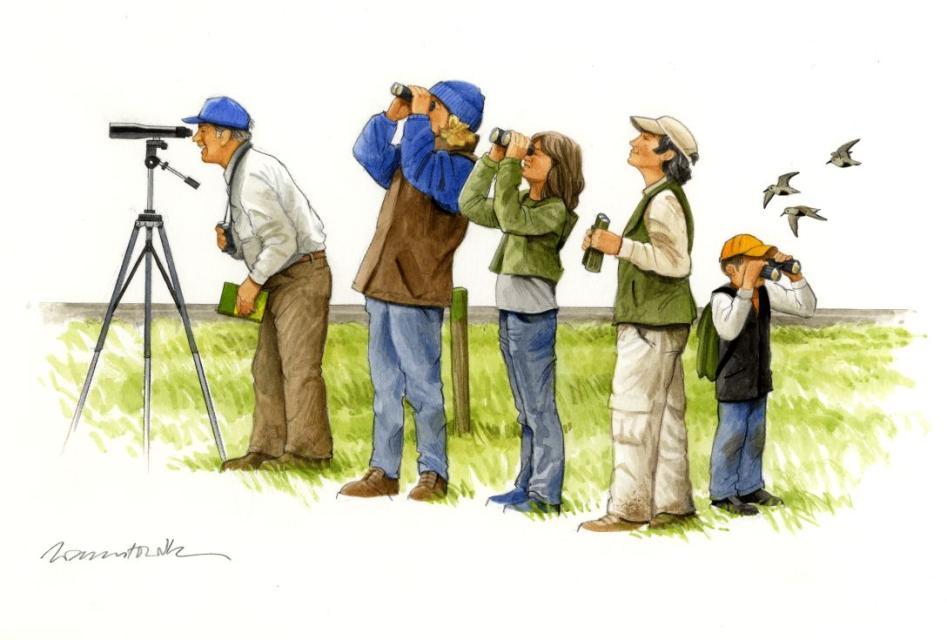 """""""Watt zum Kieken"""" – ein Spaziergang für alle Vogelfreunde"""