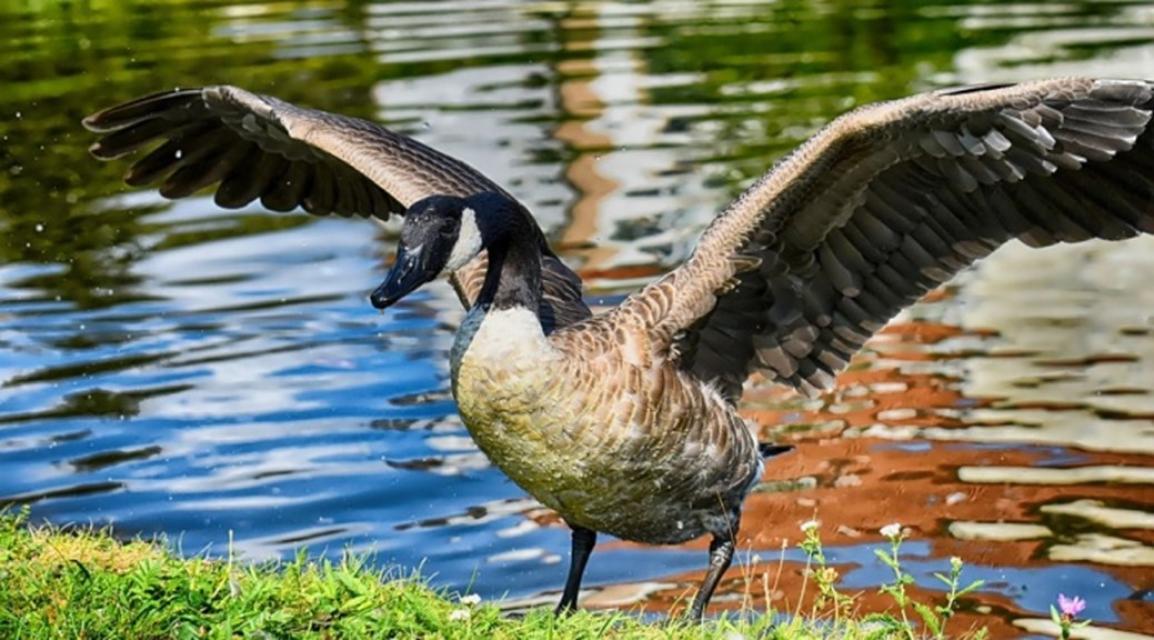 Airport Wattenmeer – Zugvögel für Einsteiger
