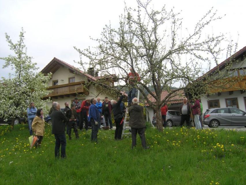 Baumschneidekurs auf der Obstwiese in Neuhausen