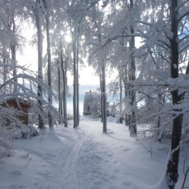 Hirschenstein im Winter - null