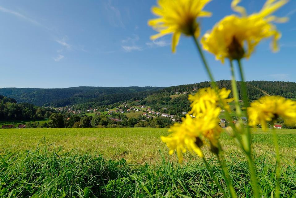 Blick in Richtung Warmensteinach