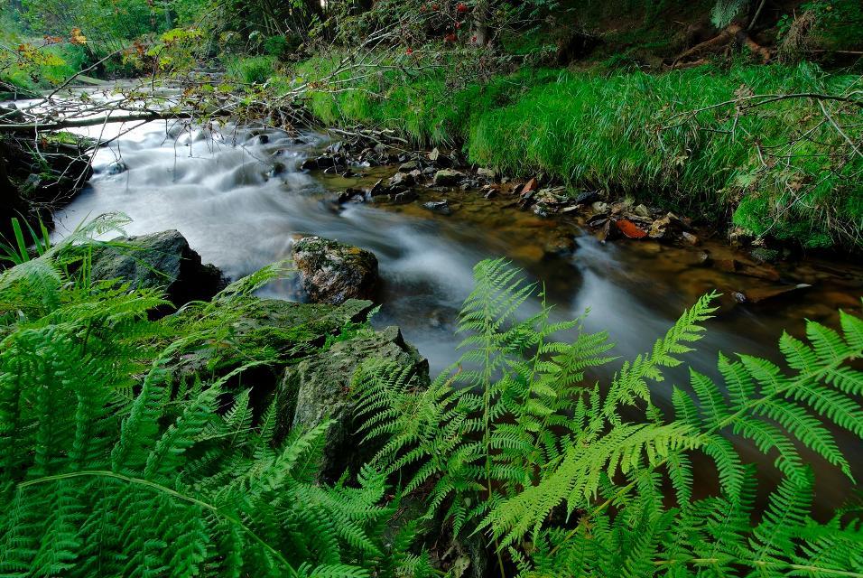 Fluß im Fichtelgebirge