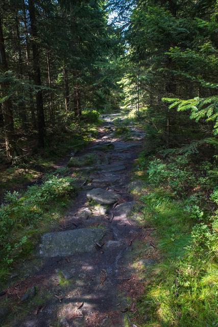 Waldweg Rudolfstein