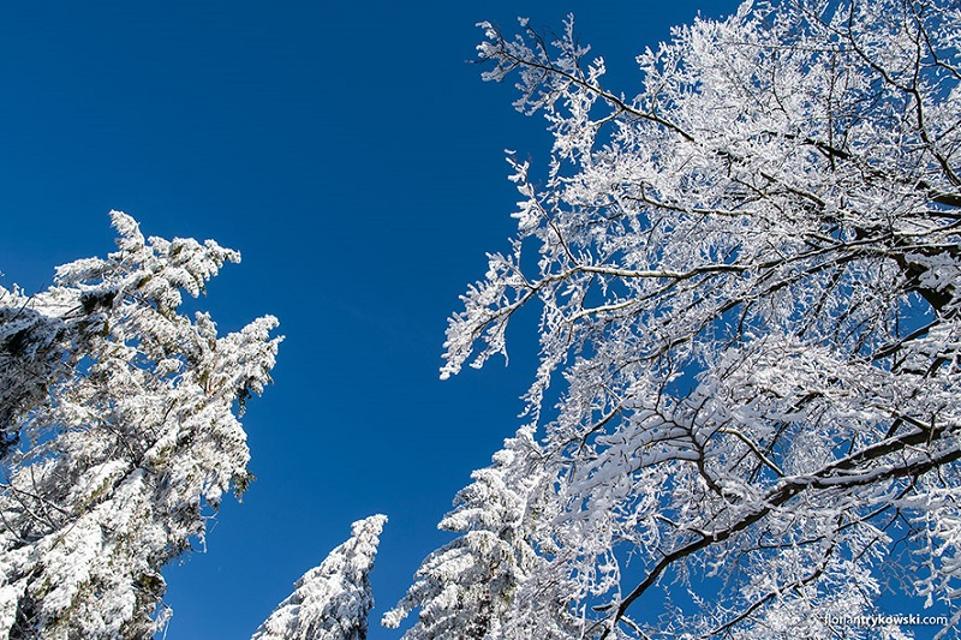 Winter-Panorama