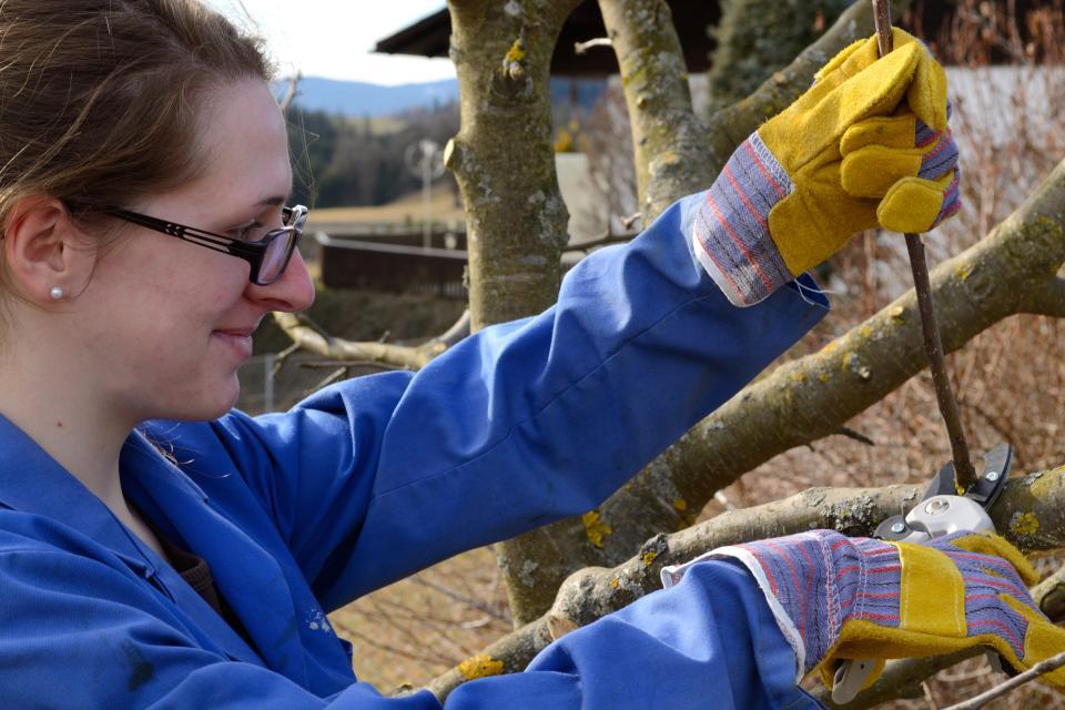 Kurs: Mit Verstand Obstbäume und Sträucher schneiden  mit Christian Kreipe