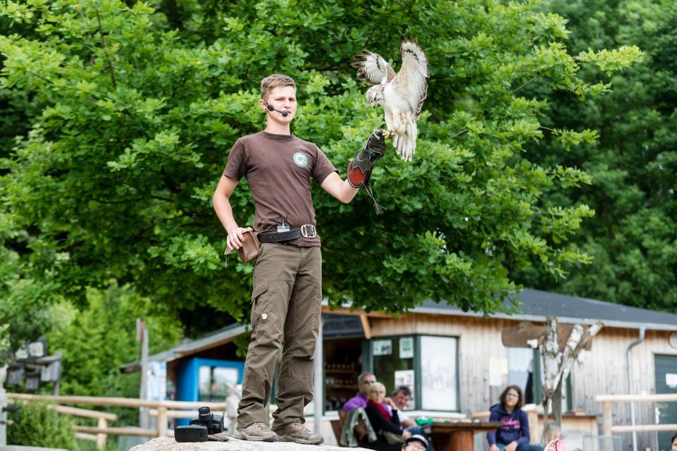 Greifvogelpark mit Falknerei