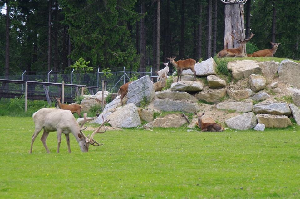 - Wildpark Mehlmeisel